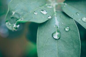 Heilraum Natur - Interdisziplinäre Fortbildung Naturtherapie