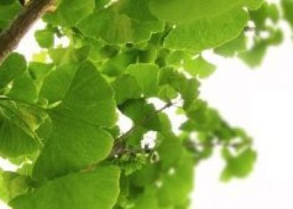 Heilraum-Natur_Blätter_Ast