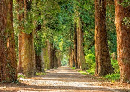 Natur heilt - Ruhe und Achtsamkeit im Wald für die Seele